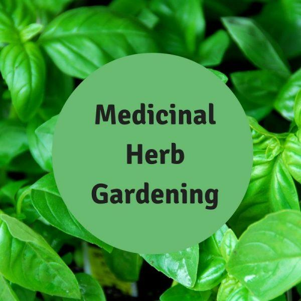 Herbal Advice from Herbalist Erin LaFaive Full Circle