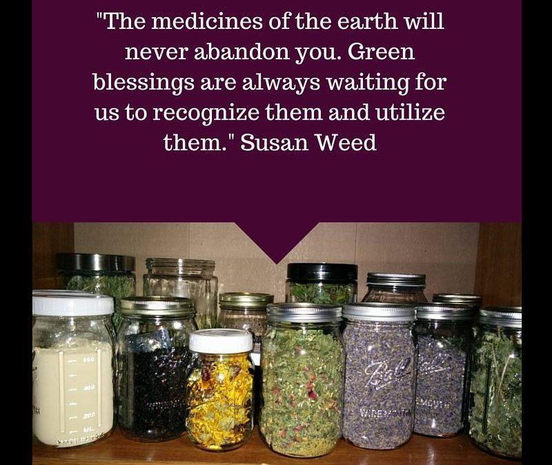 Growing medicinal plants in your backyard