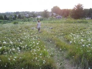 Erin in a field labyrinth