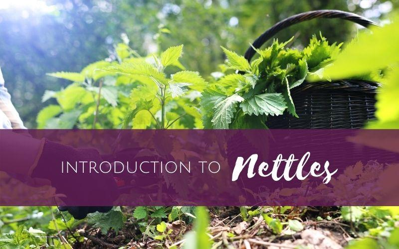 Episode 1 – Introduction to Nettles