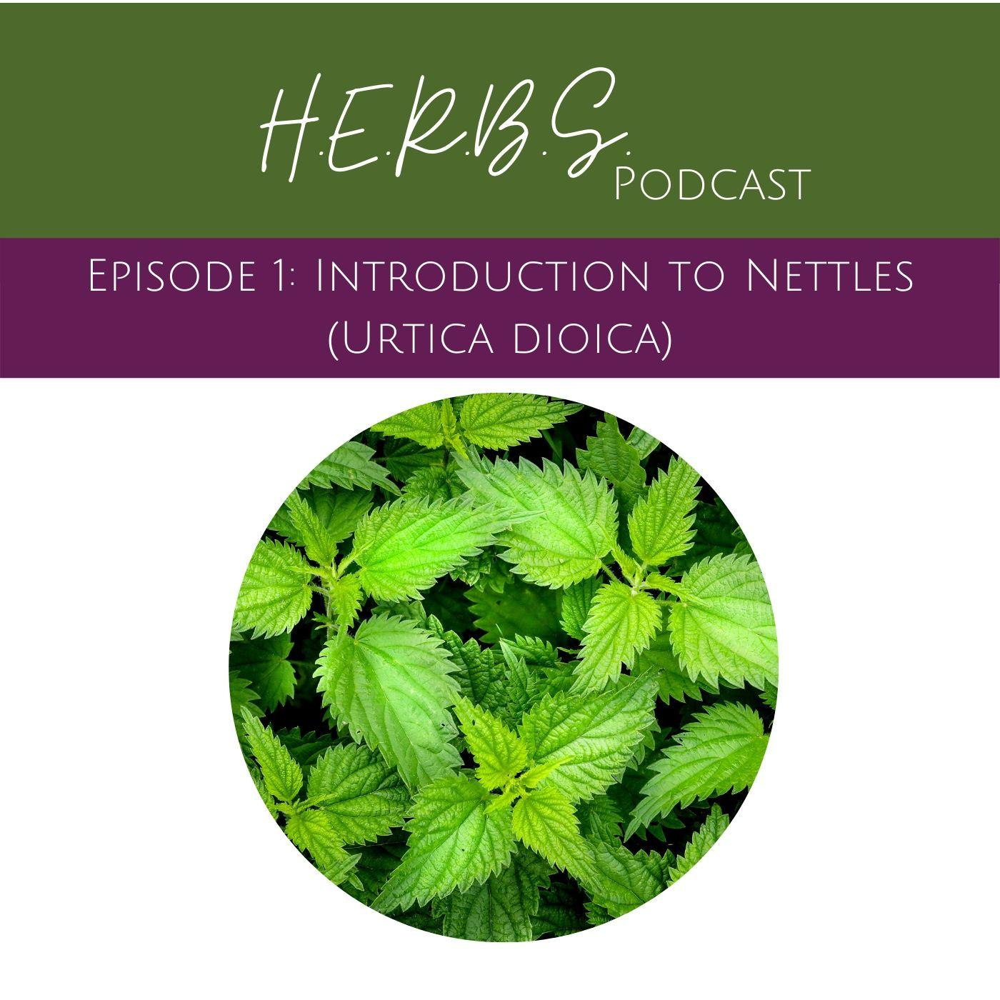 Introduction to Nettle with Erin LaFaive