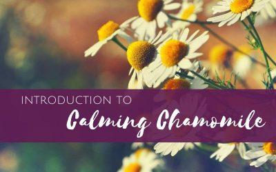 Episode 6: Introduction to Calming Chamomile