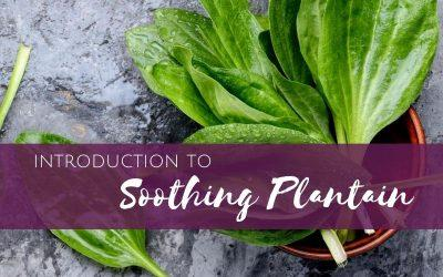 Episode 5: Introduction to Soothing Plantain