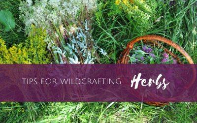 Episode 8: Tips for wildcrafting herbs