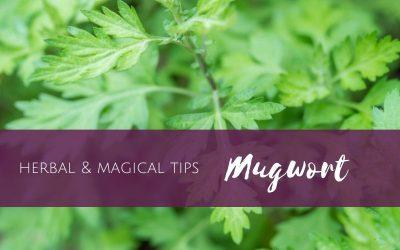 Episode 11: Herbal & Magical Tips:  Mugwort