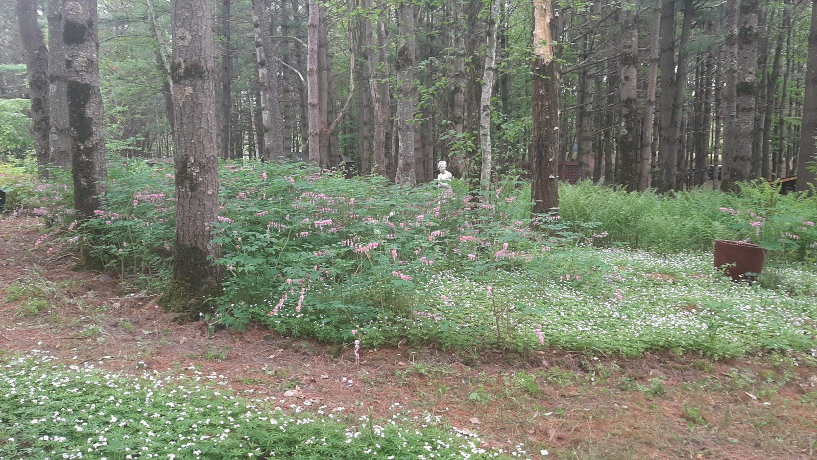 shaded woodland garden