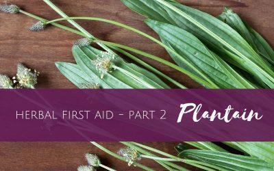 Herbal First Aid part 2 of 4 – Plantain