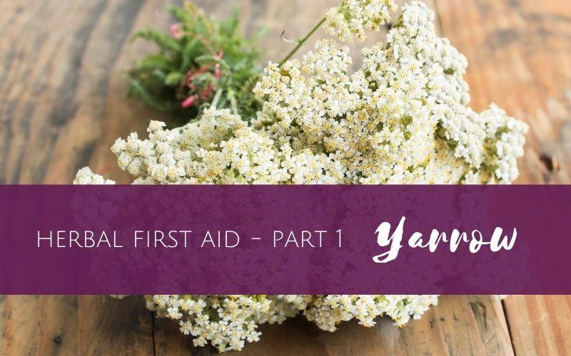Herbal First Aid part 1 of 4 – Yarrow