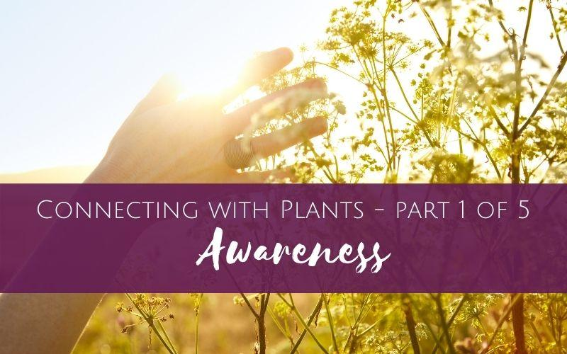 connecting with plants - awareness