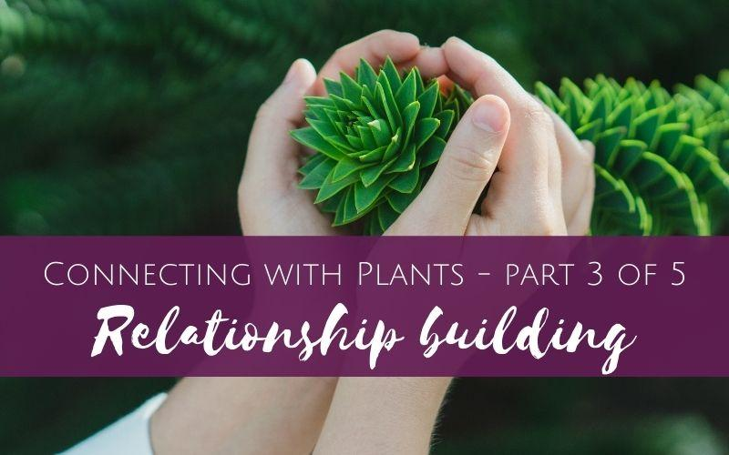 Connecting with Plants part 3 of 5 – Relationship Building