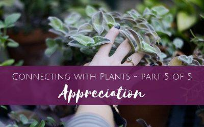 Connecting with Plants part 5 of 5 – Appreciation