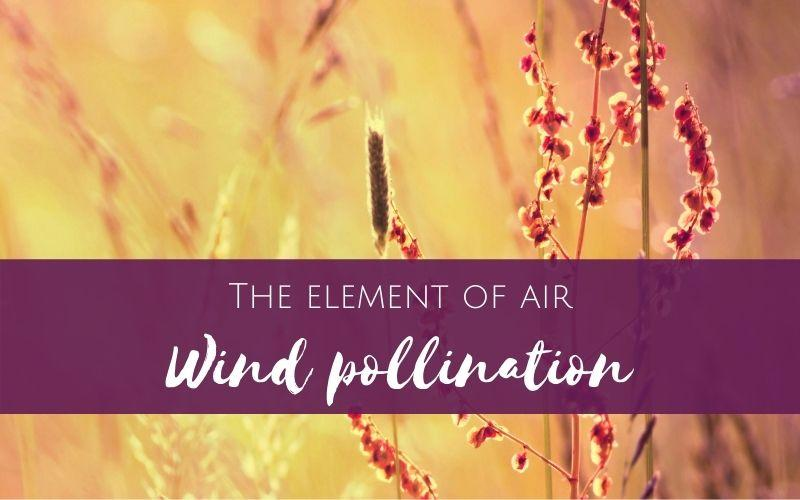 Working with the element of air: Wind Pollinated plants