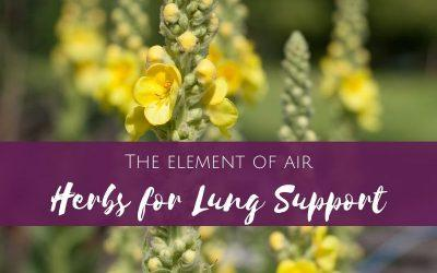 Working with the element of air: Herbs for Lung Support