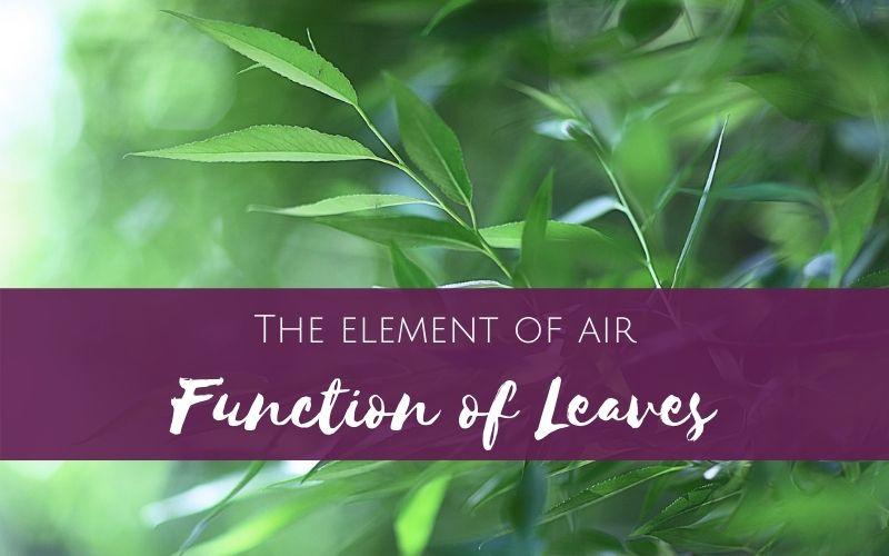 Working with the element of air: Function of Leaves