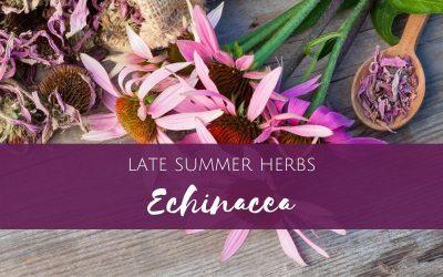 Late Summer Herbs – Echinacea