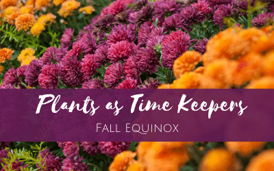 Plants as Time Keepers: Fall Equinox
