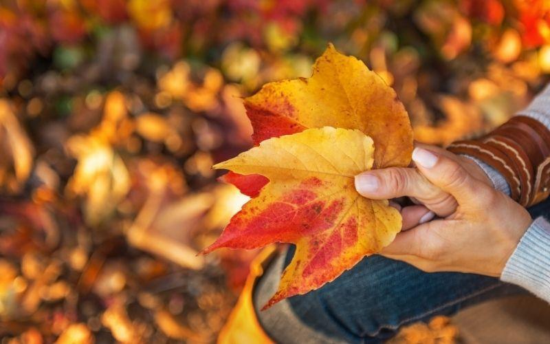 women holding leaves - fall harvest