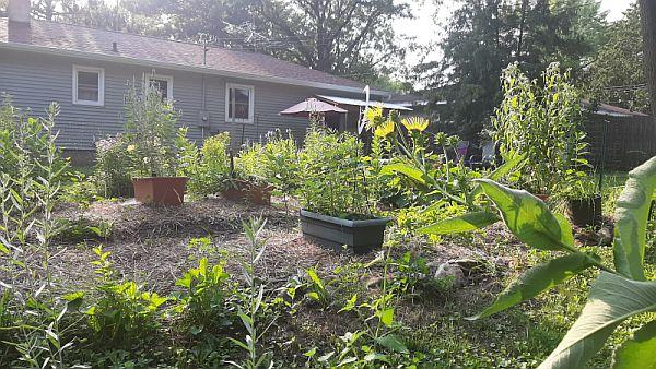 my former garden with containers