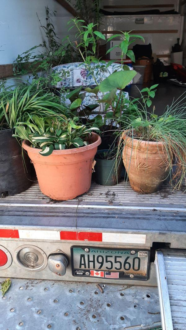 plants on the moving truck