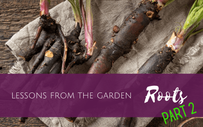 Lessons from the Garden: Roots (part 2)