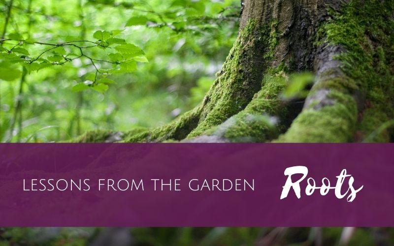 Lessons from the Garden: Roots (part 1)